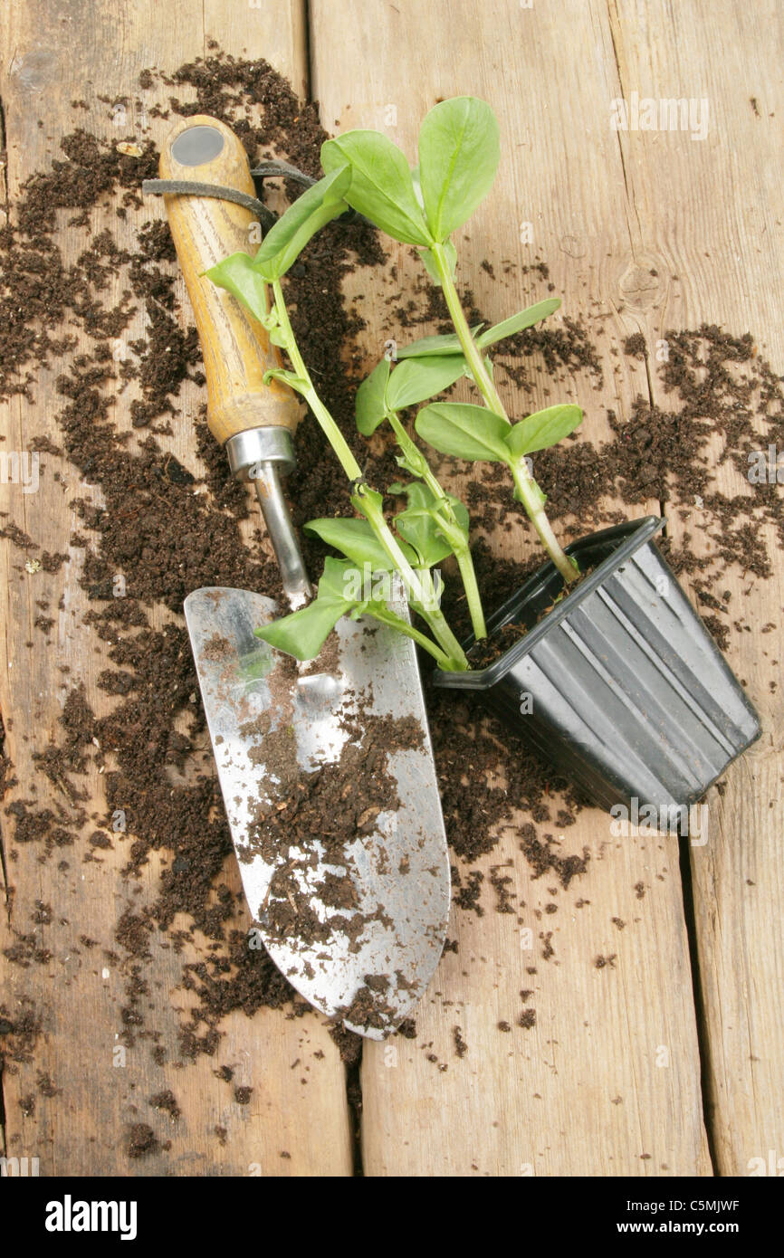 Plant seedling trowel and soil on a potting bench - Stock Image