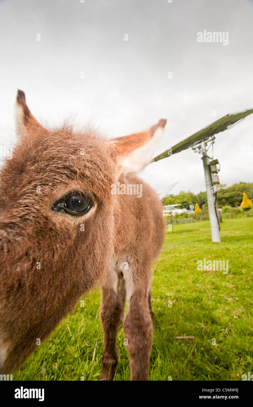 The Bowland Wild Boar Park is off grid and powered by solar panels and a wind turbine, with a back up diesel generator. - Stock Image