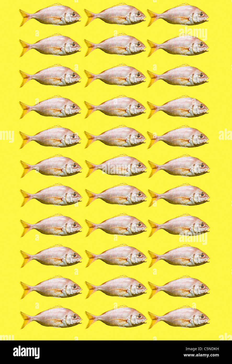Fish on a yellow background - Stock Image