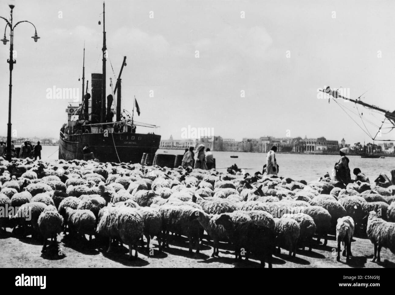 Tripolitania flocks are moved to save them from drought in Cyrenaica, Libya, 1935 - Stock Image