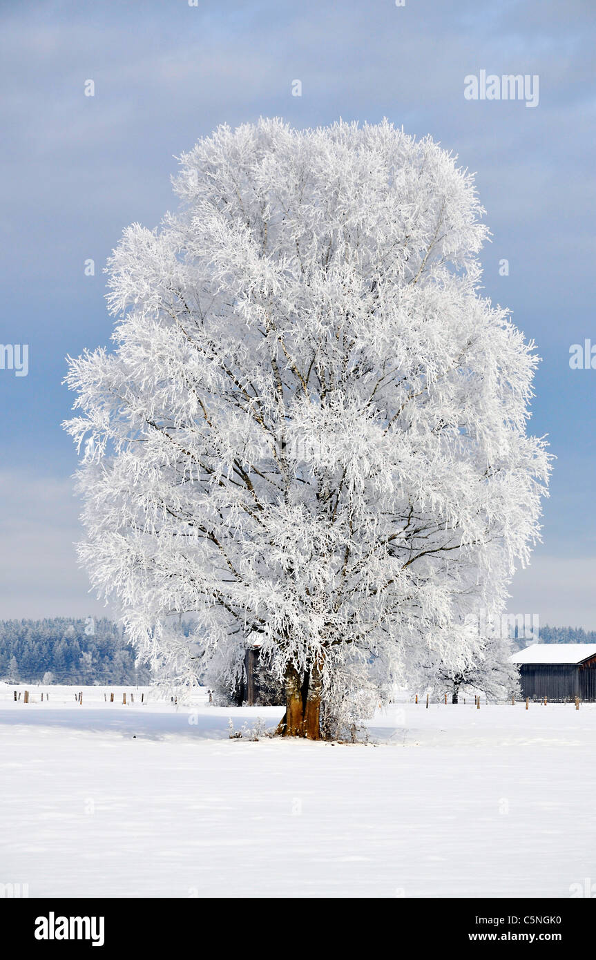 Hoarfrost has virtually frozen the nature in bavaria, germany. - Stock Image