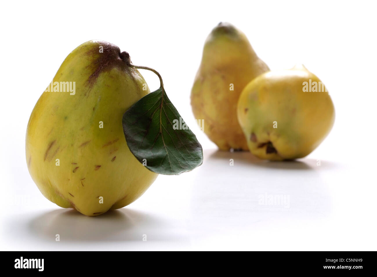 Three whole quinces on white - Stock Image