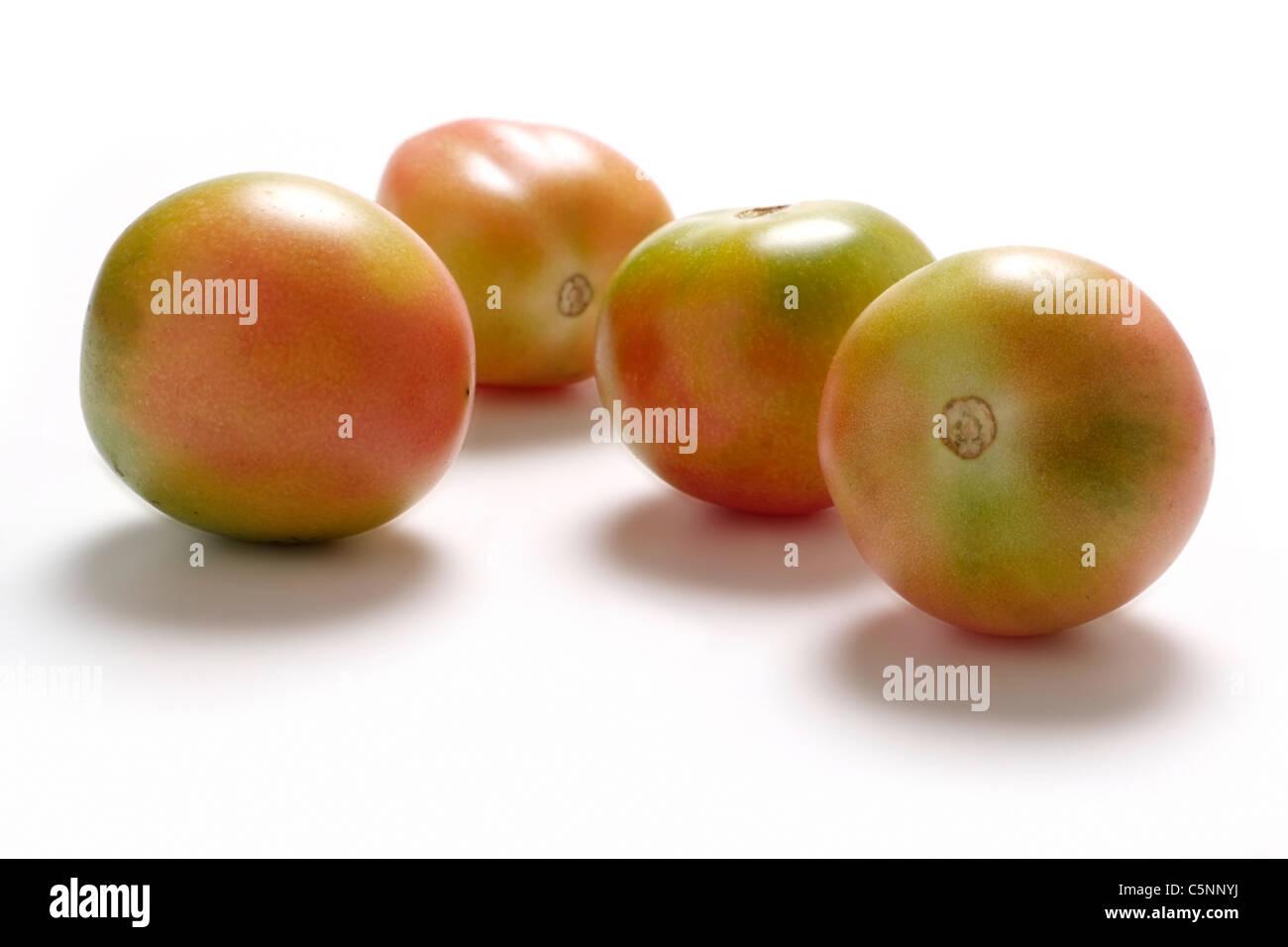 Tomato varieties:  Madagaskar - Stock Image