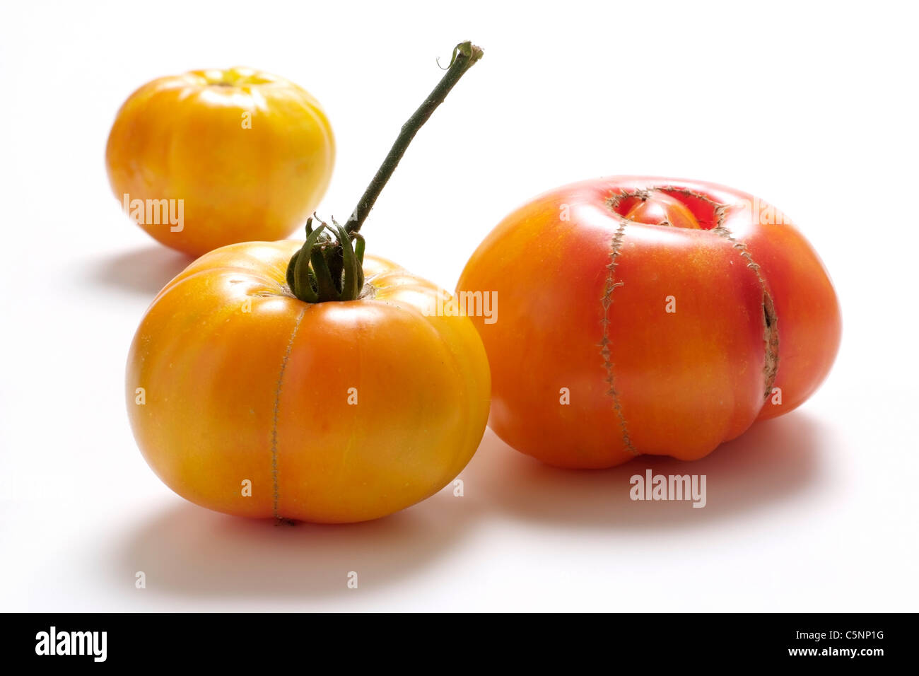 Tomato varieties:  Rainbow - Stock Image