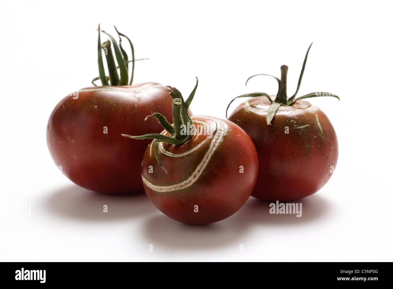 Tomato varieties: Black from Russia - Stock Image