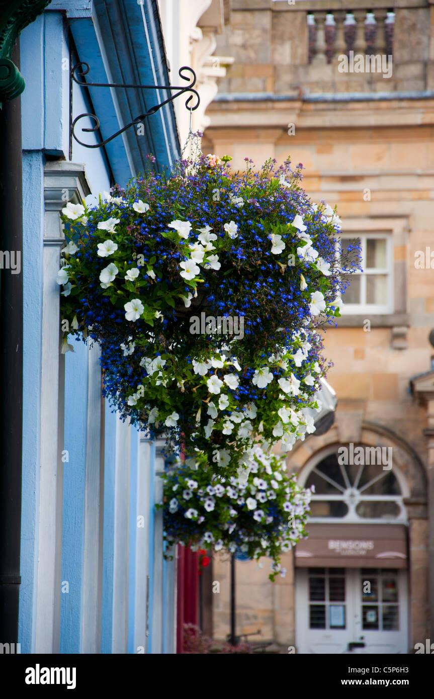 Hanging baskets shop Ludlow - Stock Image