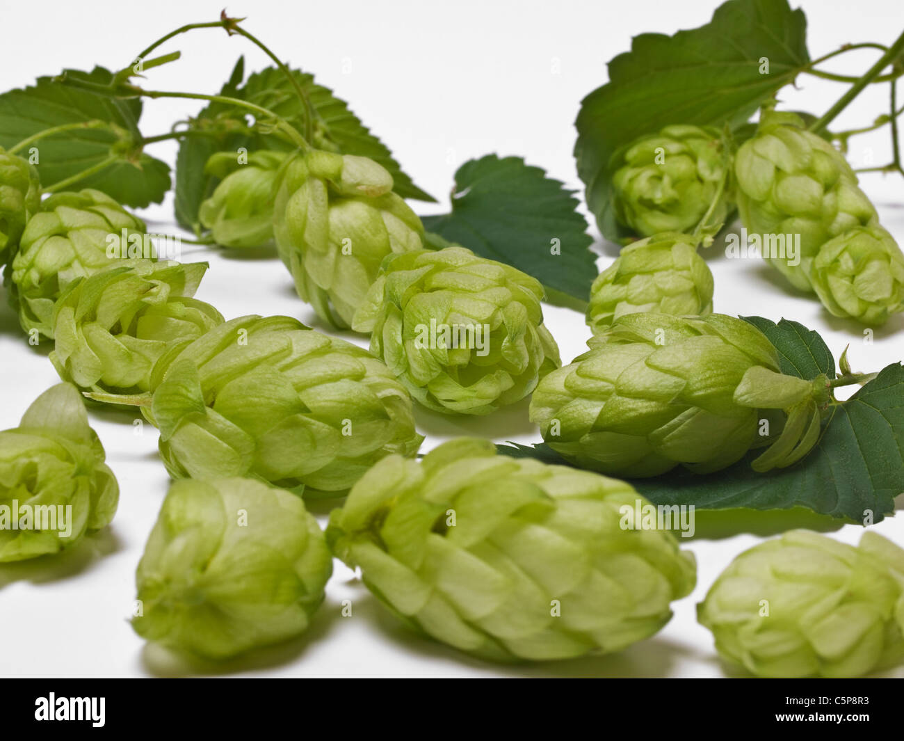 Detailansicht einer Hopfenpflanze | Detail photo of a hop plant - Stock Image