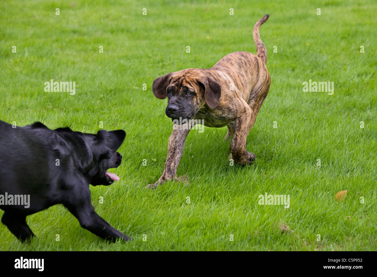 how to stop dogs play fighting