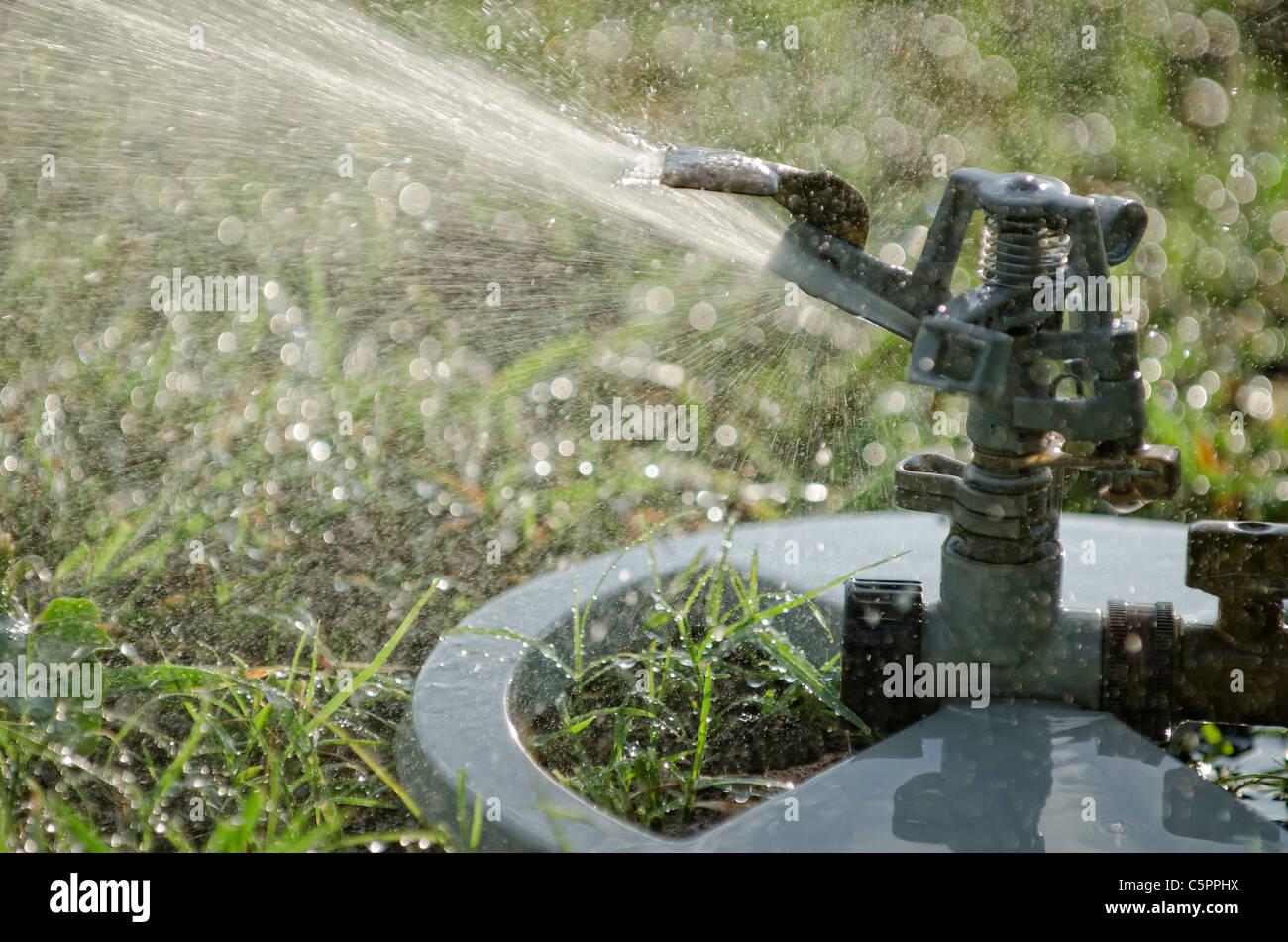 Lawn Sprinkler - Stock Image