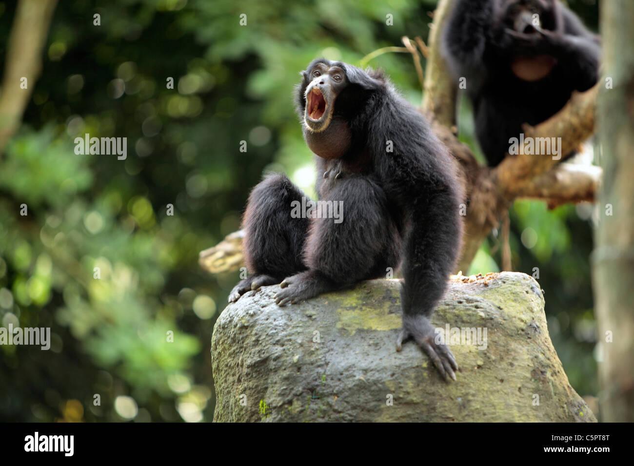 Monkey Forest, Ubud, Bali, Indonesia - Stock Image