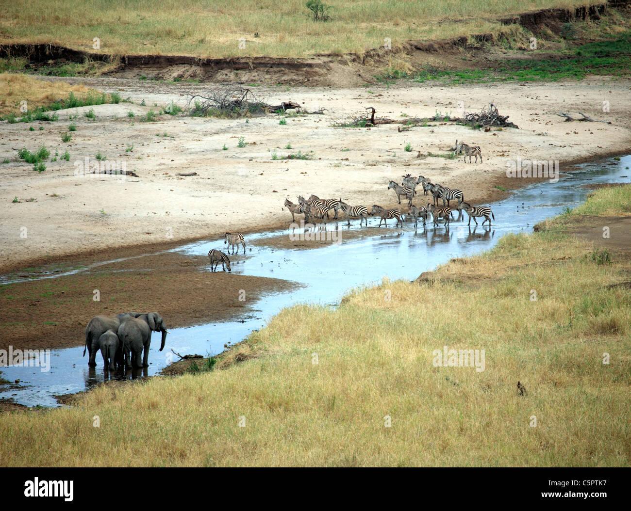 Tarangire National Park, Tanzania - Stock Image