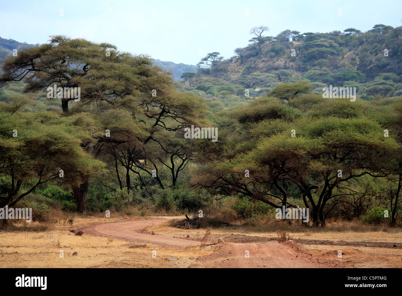Lake Manyara National Park, Tanzania - Stock Image