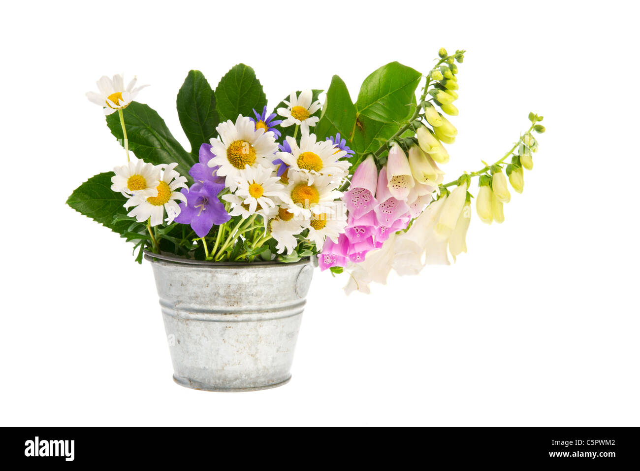 Purple Foxglove flower and white daisies and other wild flowers in bucket Stock Photo
