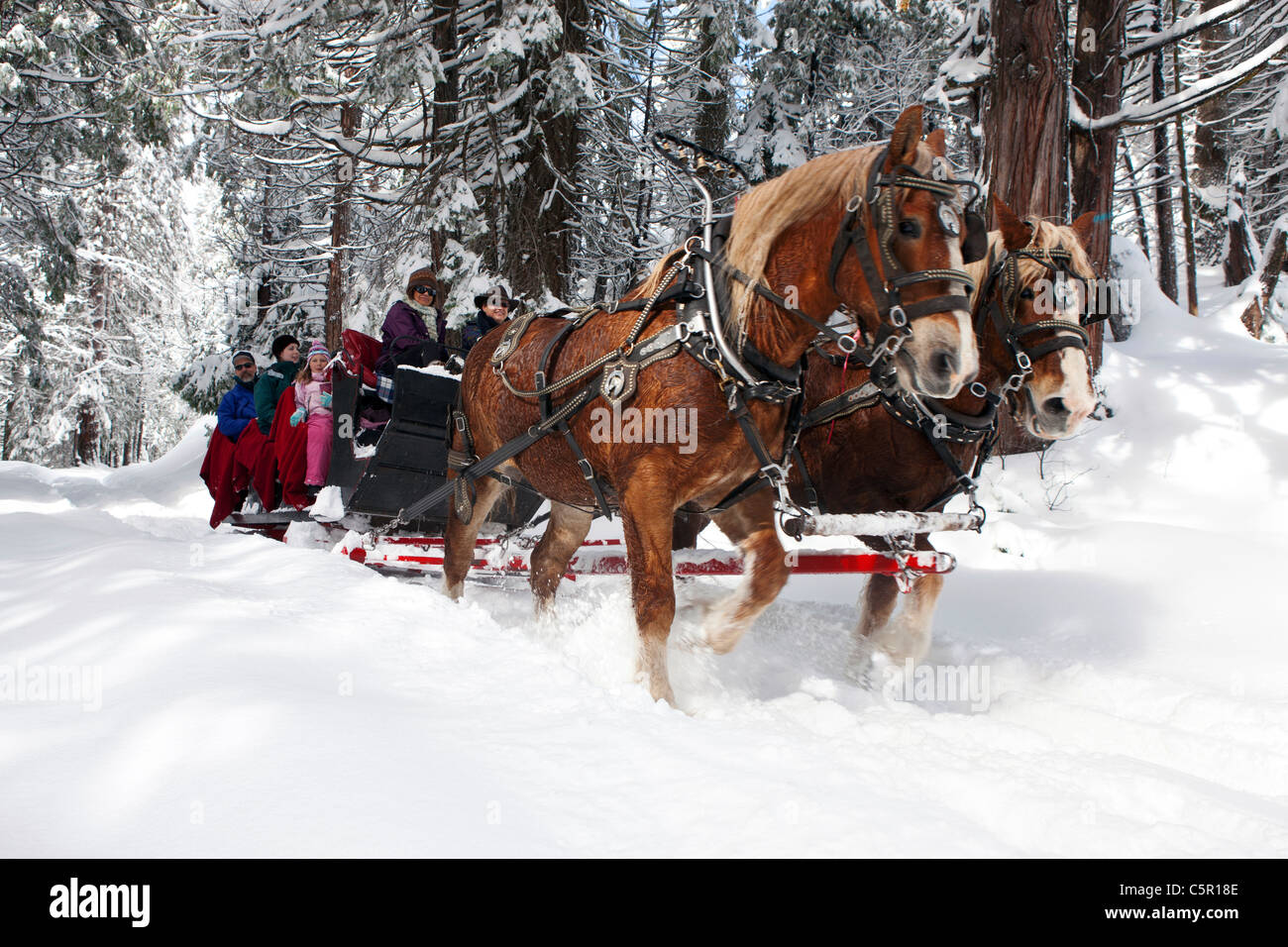 horses pulling sleigh stock photos horses pulling sleigh stock