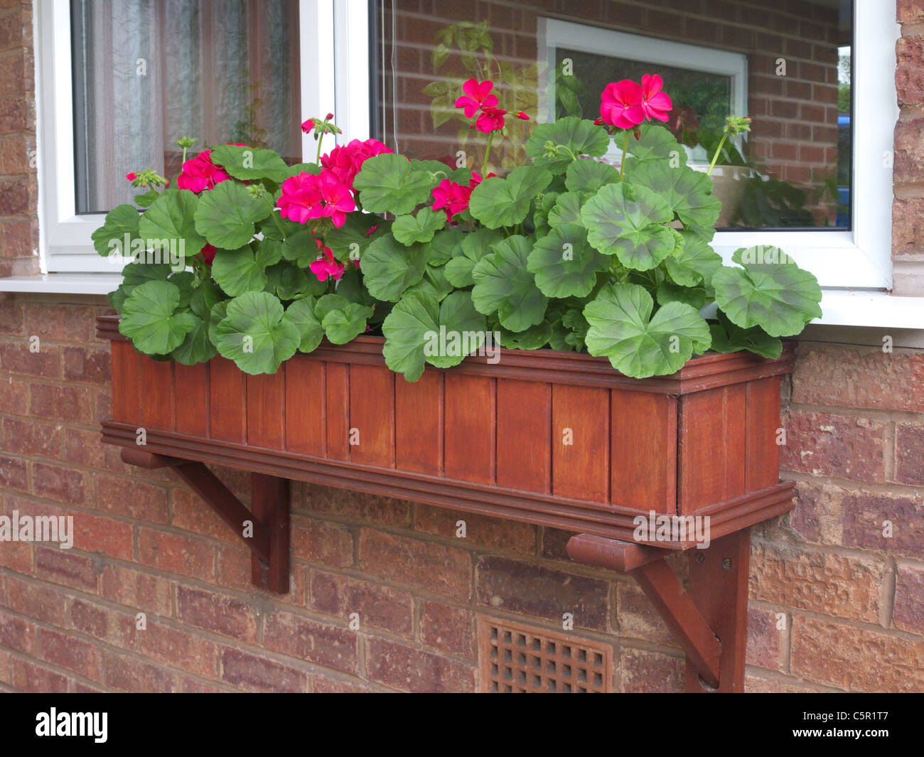 Wooden Window Box planted with Red Geraniums, UK Stock Photo