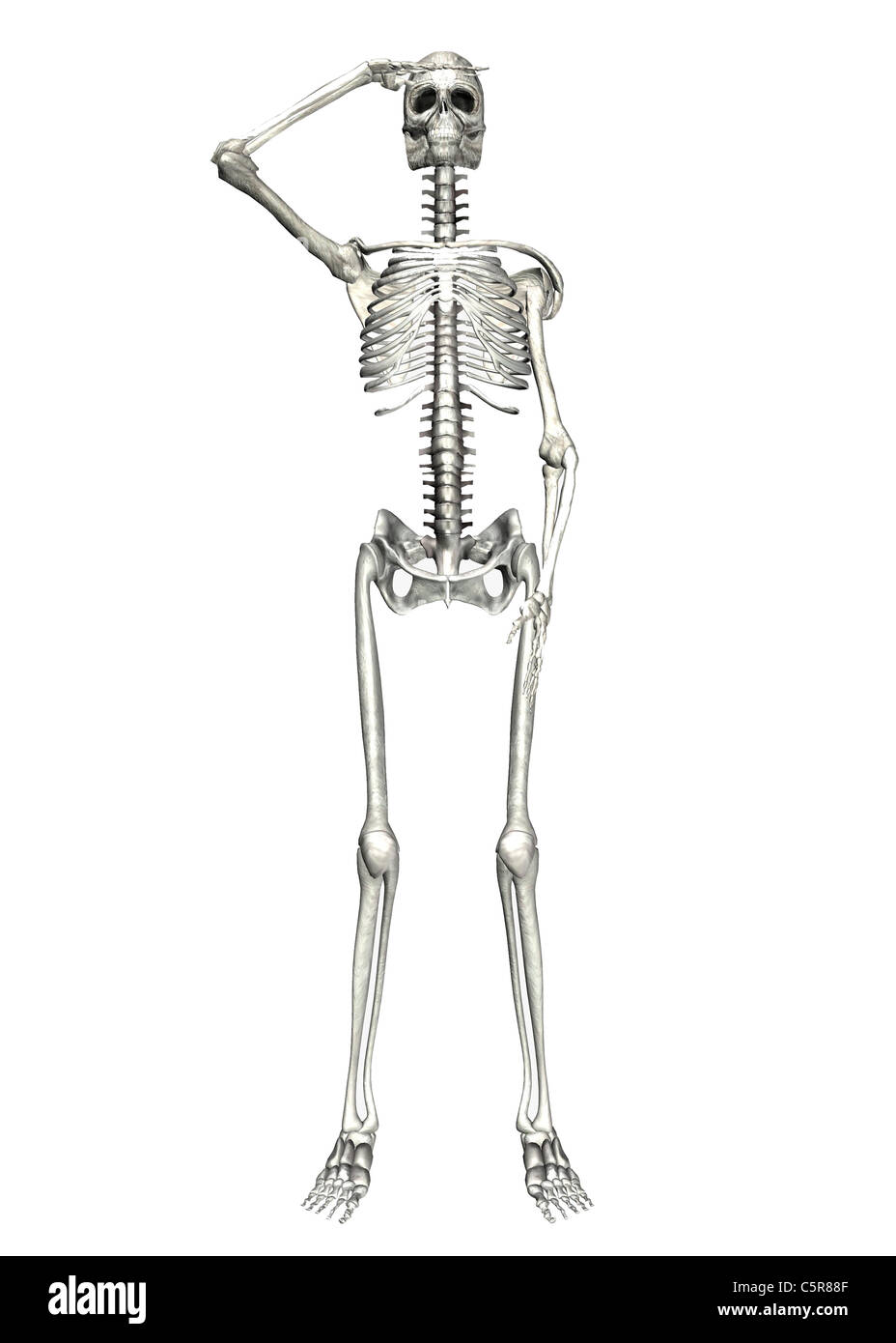 Illustration of a Skeleton saluting on a white background Stock ...