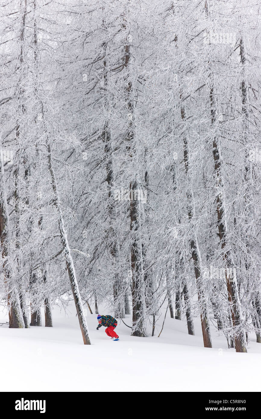 A snowboarder riding through a forest emerges from the snow covered trees. - Stock Image