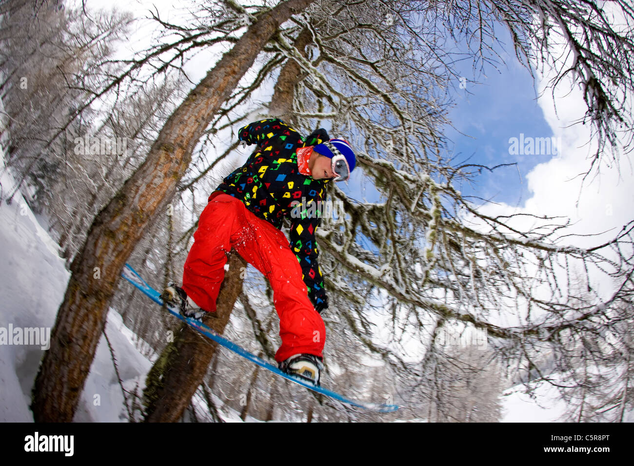A snowboarder riding through a snowy forest jumps through two trees. - Stock Image