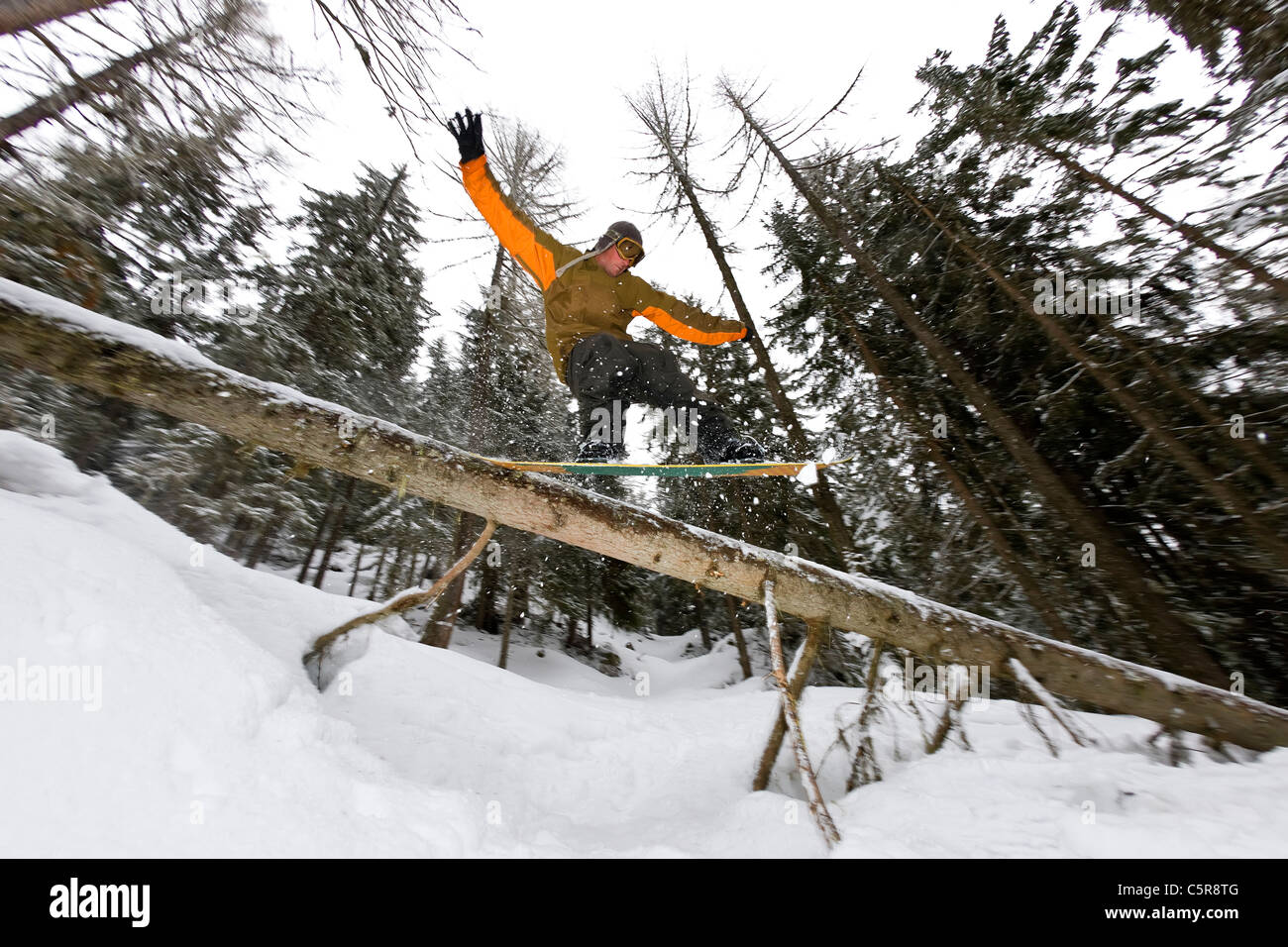 A snowboarder riding the back country sliding over a a fallen tree - Stock Image