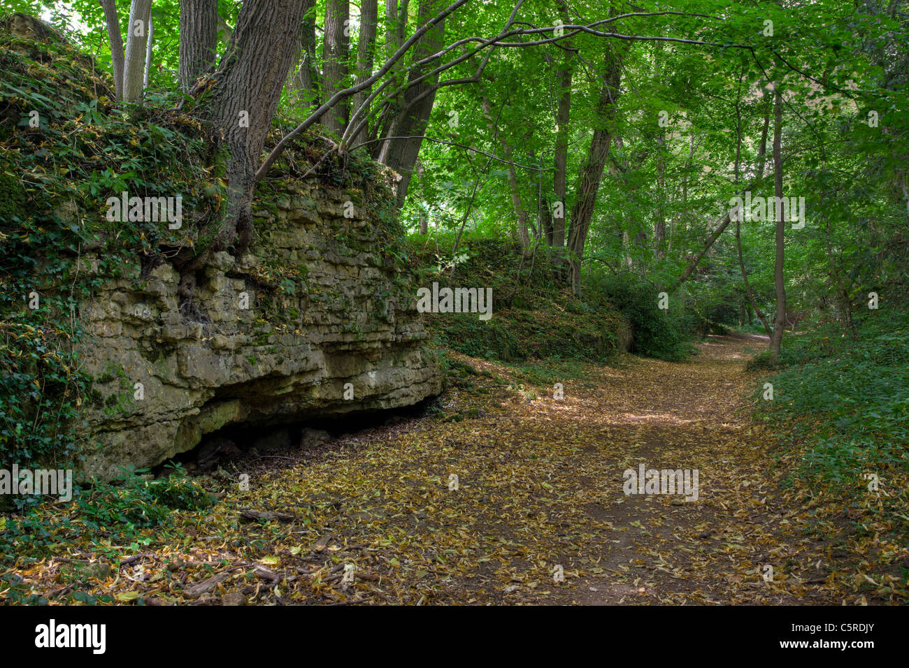 Anston Stones Wood, South Yorkshire. An ancient woodland and Site of Special Scientific Interest (SSSI) - Stock Image
