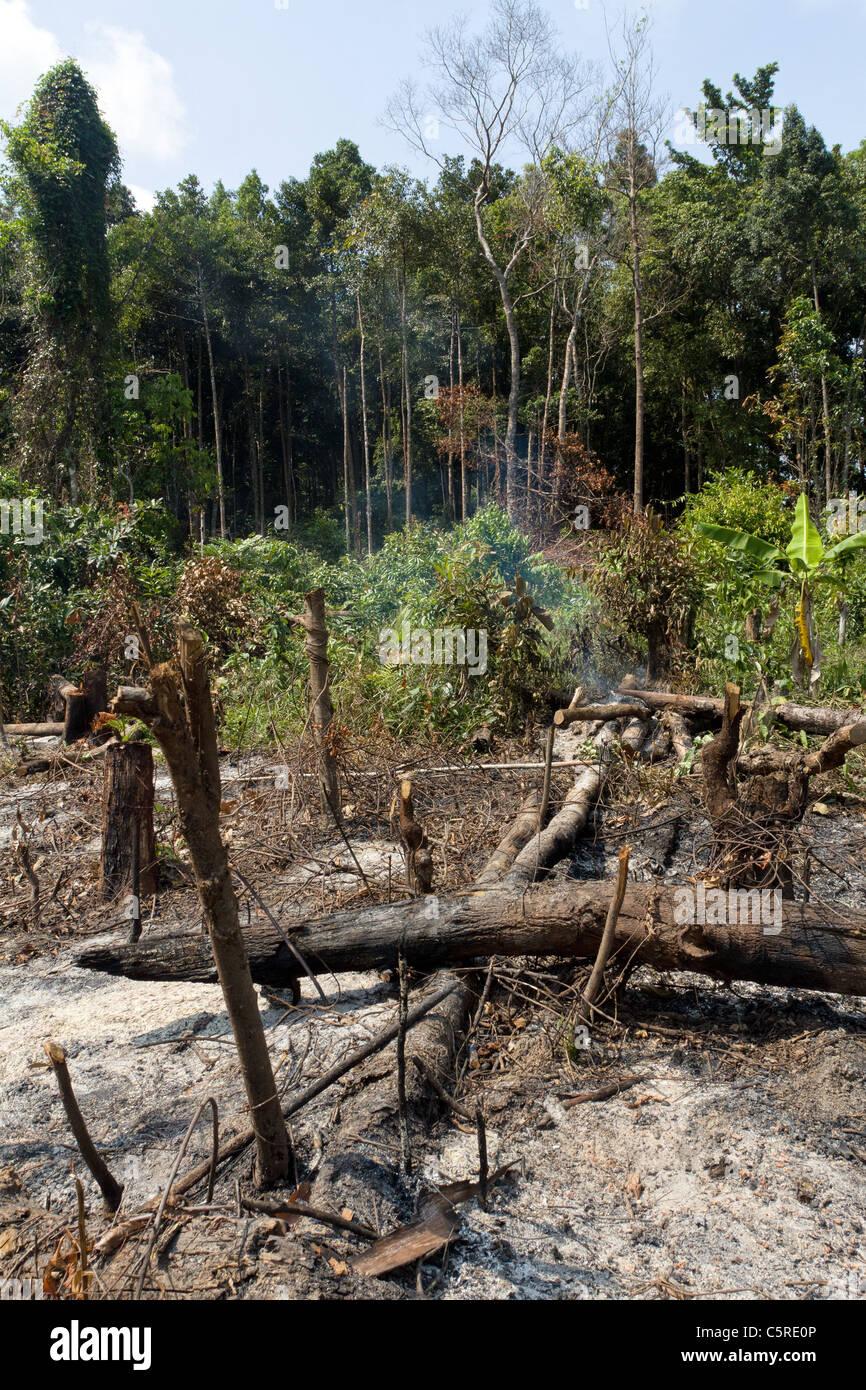 deforestation in thailand