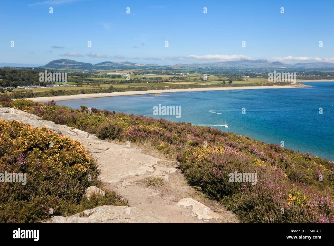 Heather by path on Mynydd Tir-y-Cwmwd with view to Cardigan Bay coastline in summer. Llanbedrog Lleyn Peninsula - Stock Image