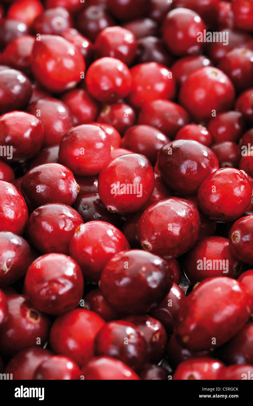 Cranberries (Vaccinium macrocarpon), full frame - Stock Image