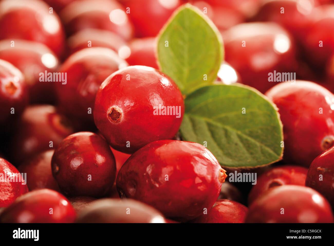 Cranberries (Vaccinium macrocarpon), full frame, close-up - Stock Image