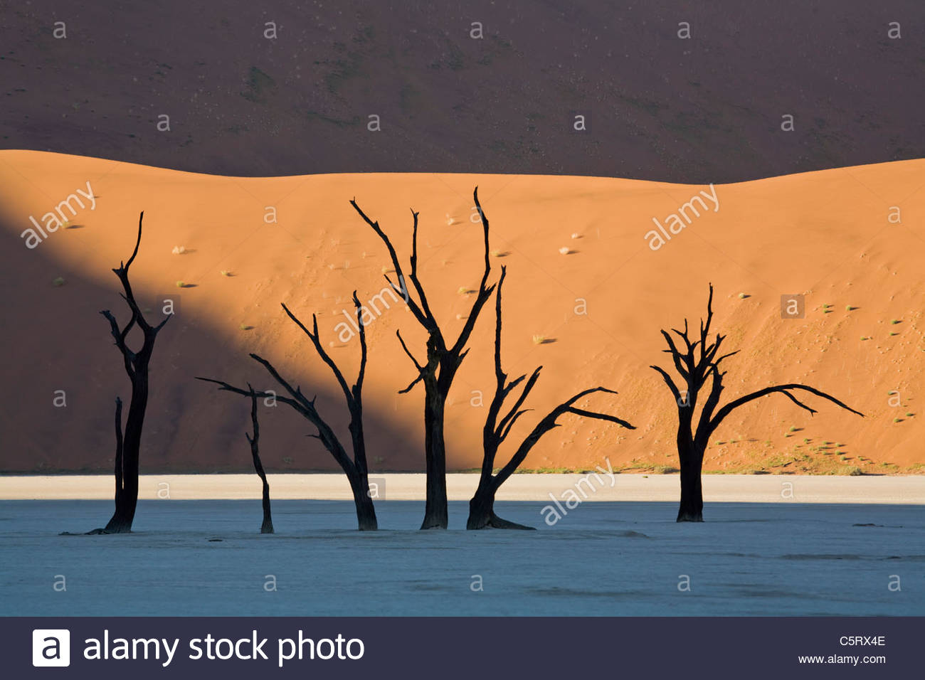 Africa, Namibia, Deadvlei, Dead trees - Stock Image