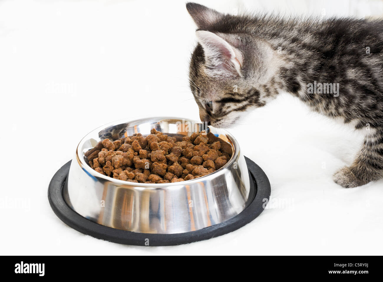 Domestic cat, kitten at feeding dish, side view - Stock Image