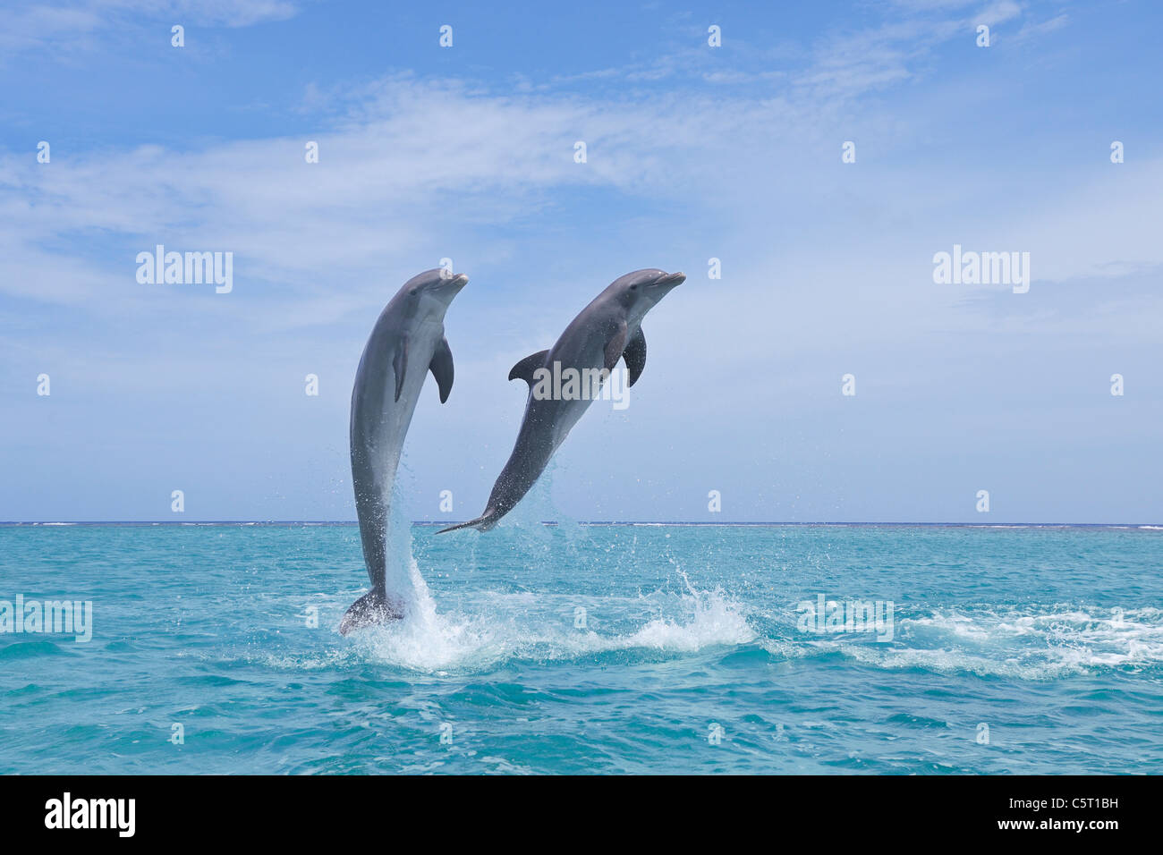 Latin America, Honduras, Bay Islands Department, Roatan, Caribbean Sea, View of bottlenose dolphins jumping in seawater Stock Photo