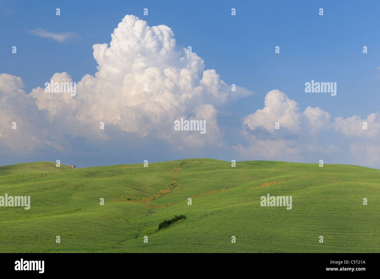 Italy, Tuscany, Province of Siena, Val d'Orcia, Pienza, View of cumulonimbus cloud with green field - Stock Image