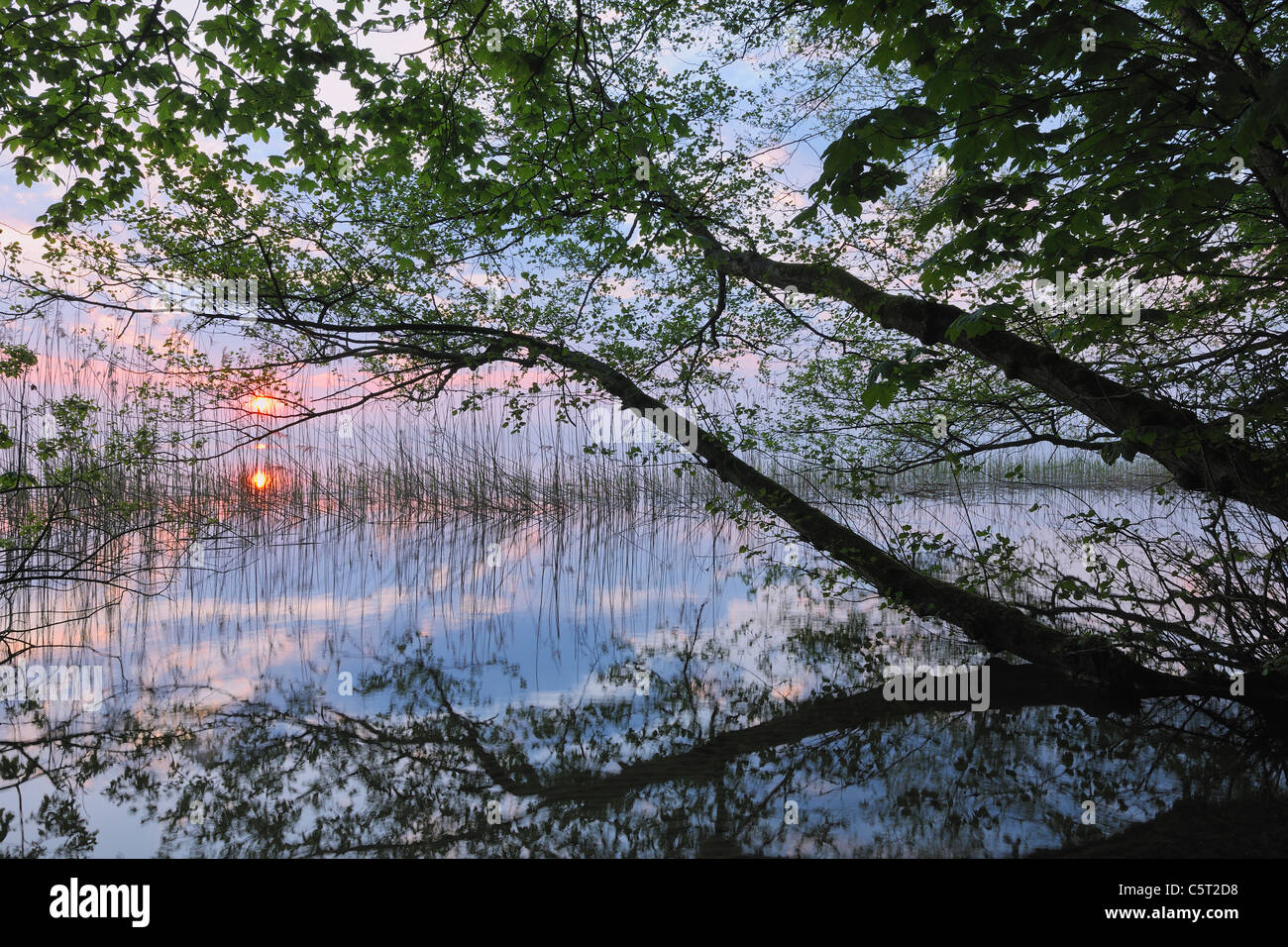 Germany, Mecklenburg-Vorpommern, Mecklenburger Seenplatte, Plau am See, View of sunrise with reeds and trees at - Stock Image