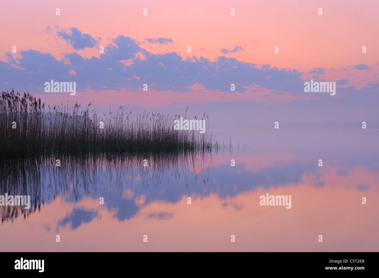 Germany, Mecklenburg-Vorpommern, Mecklenburger Seenplatte, Plau am See, View of sunrise with reeds and reflection - Stock Image