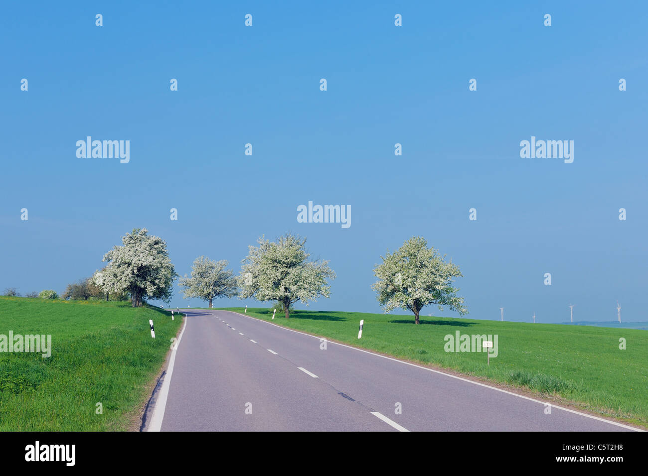 Germany, Saarland, View of blossoming fruit tree besides rural road - Stock Image