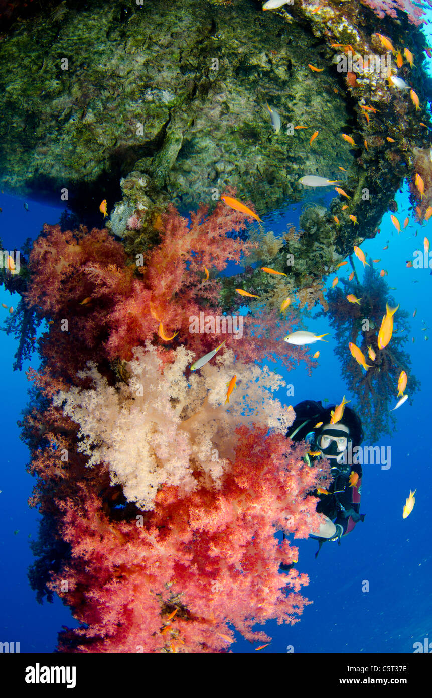 Coral growth on the buoy wreck structure, Nuweiba, Red Sea, Sinai, Egypt - Stock Image