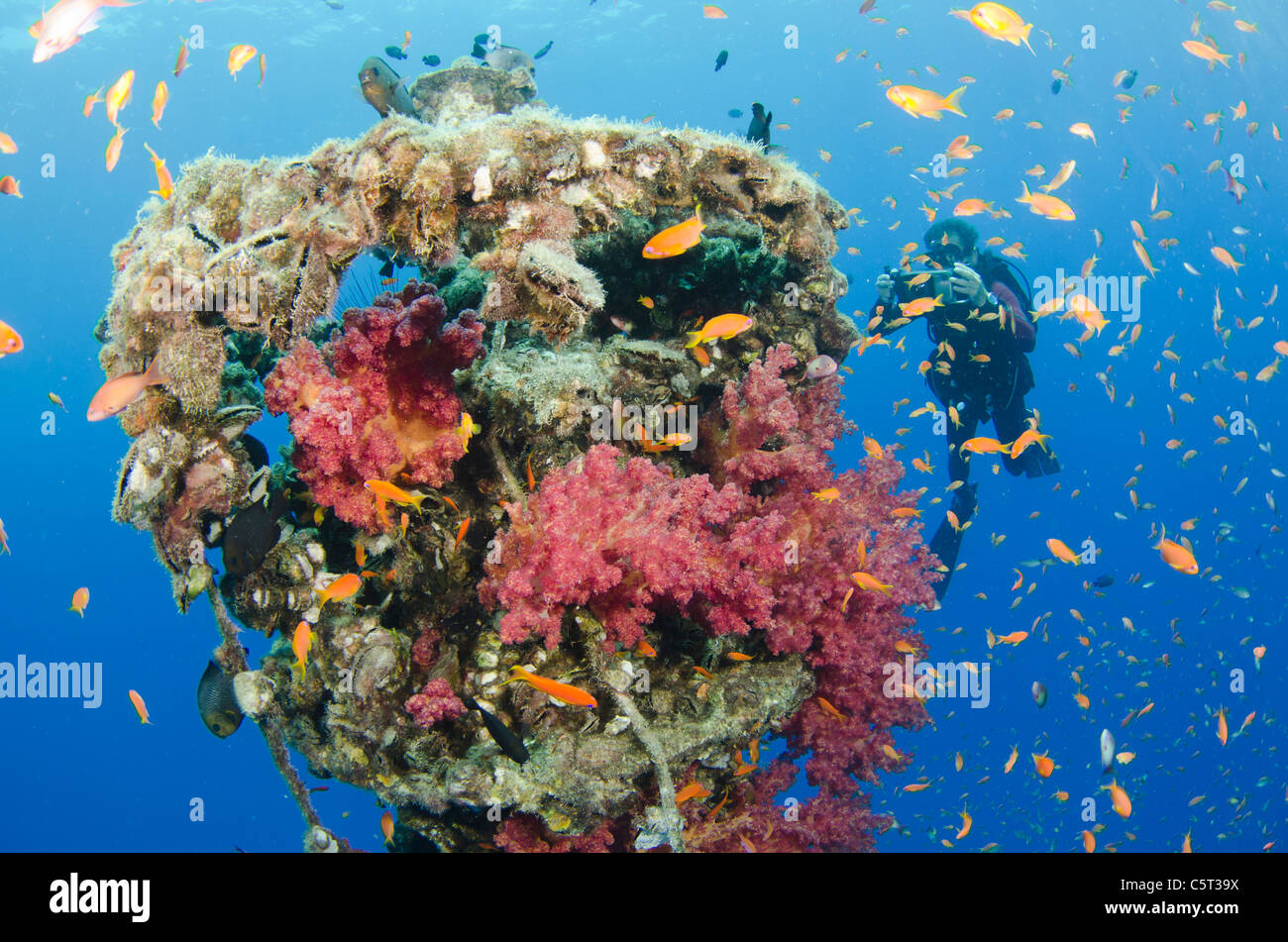 Coral growth on the buoy wreck structure, Nuweiba, Egypt, Sinai, Red Sea - Stock Image