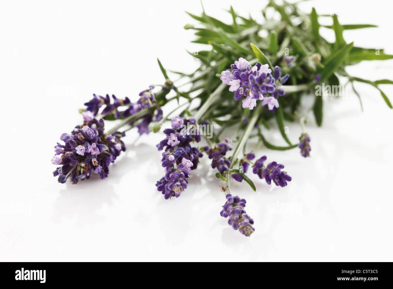Bunch of lavender (Lavandula angustifolia), elevated view - Stock Image