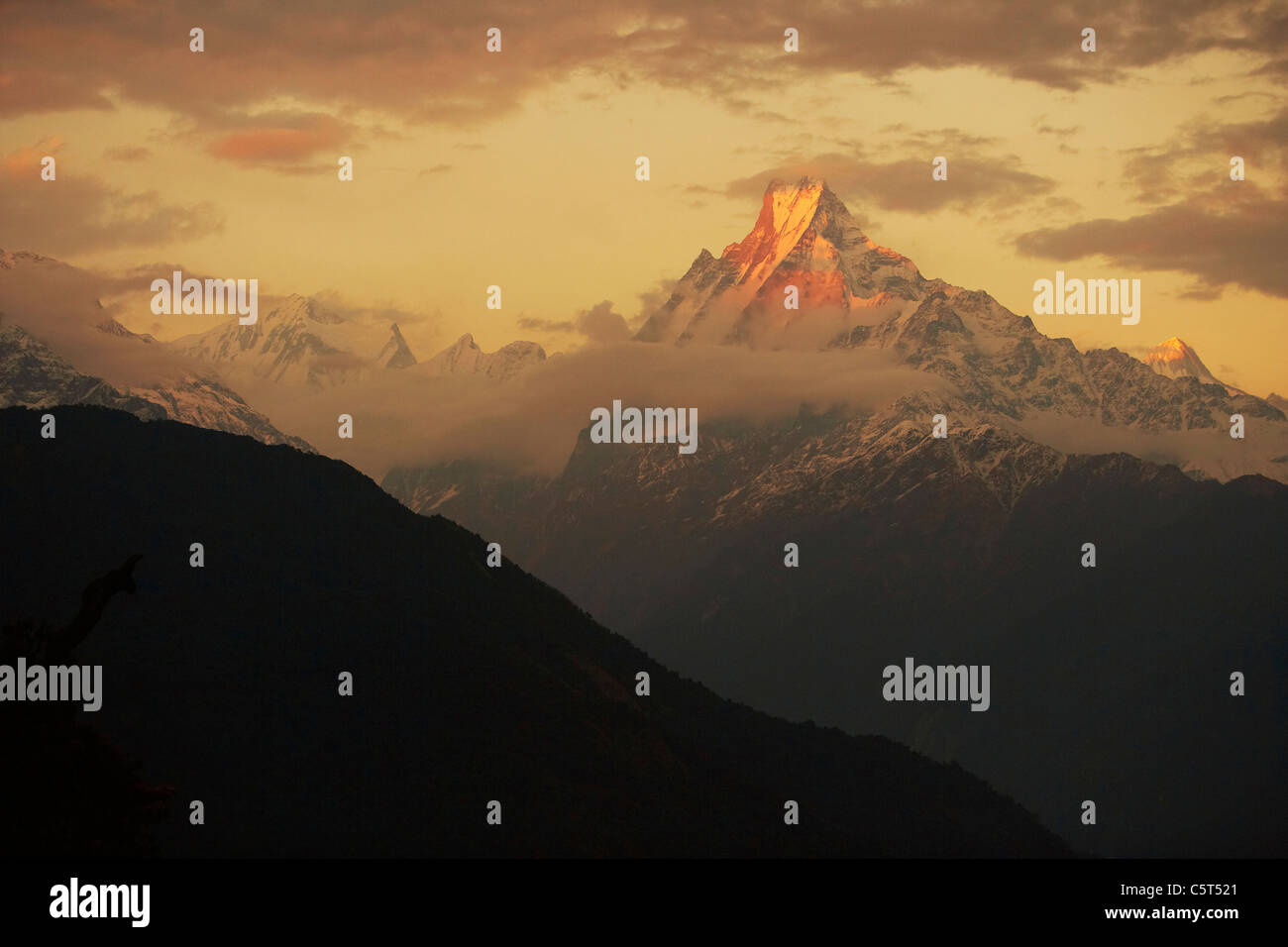 Sunset over Machhapuchhare (Machapuchare) or fish tail mountain seem from Tadapani on the Annapurna Trek, Himalayas, - Stock Image
