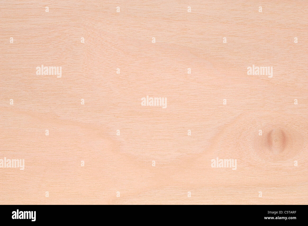 Wood surface, Birch Wood (Betula spp.) full frame - Stock Image