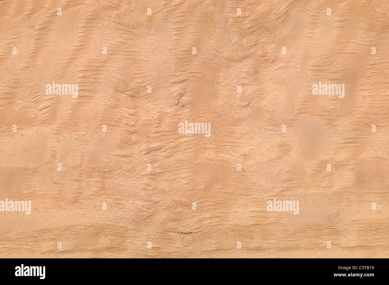 Wood surface, Eucalyptus Wood (Eucalyptus spp.), full frame - Stock Image