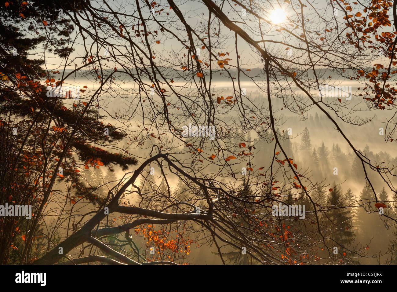 Germany, Bavaria, Upper Bavaria, View of pupplinger au near wolfratshausen in morning - Stock Image
