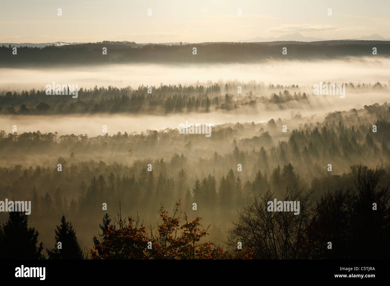 Germany, Bavaria, Upper Bavaria, View of pupplinger au near wolfratshausen in morning - Stock Image