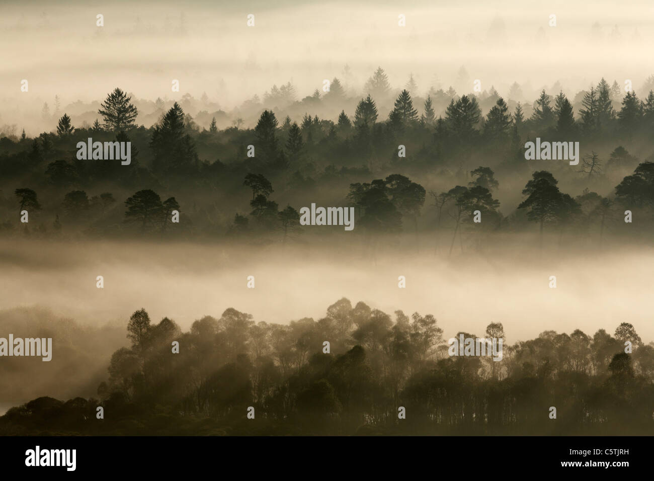 Germany, Bavaria, Upper Bavaria, View of pupplinger au near wolfratshausen in morning Stock Photo