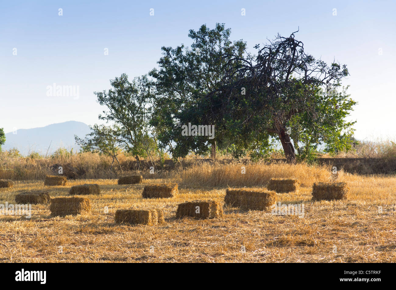 Ibiza, Balearics, Spain - countryside in Sa Vorera valley, hayfield with bales - Stock Image