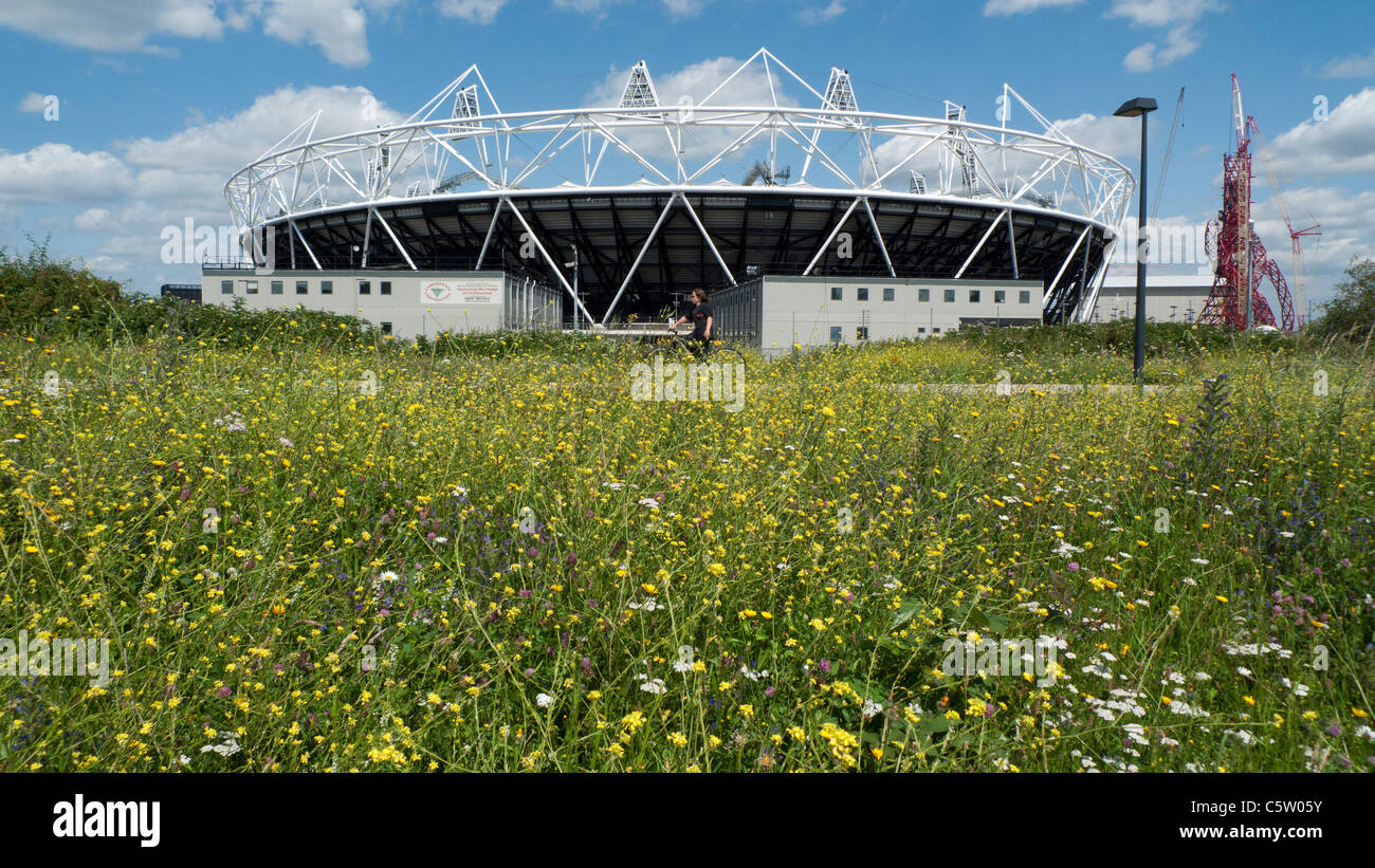 A young person cyclng along the Greenway Nigel Dunnett garden meadow at Olympic Stadium renamed Queen Elizabeth - Stock Image