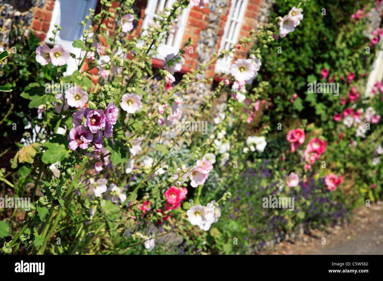 Pretty Summer Flowers Growing At The Front Of An Old Cottage In