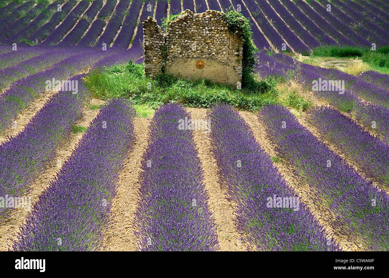 France, Provence, Valensole, Lavender field and stone house - Stock Image