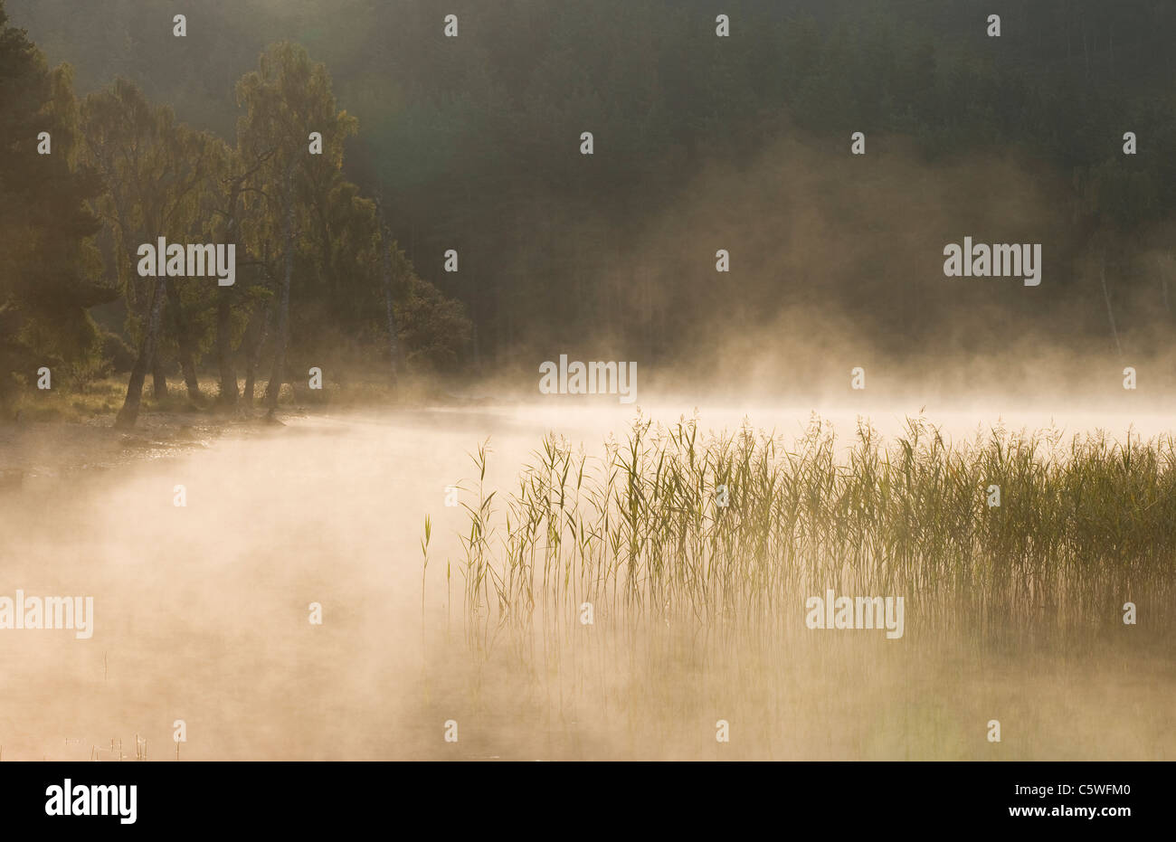 Loch Pityoulish on misty morning, Cairngorms National Park, Scotland, Great Britain. Stock Photo