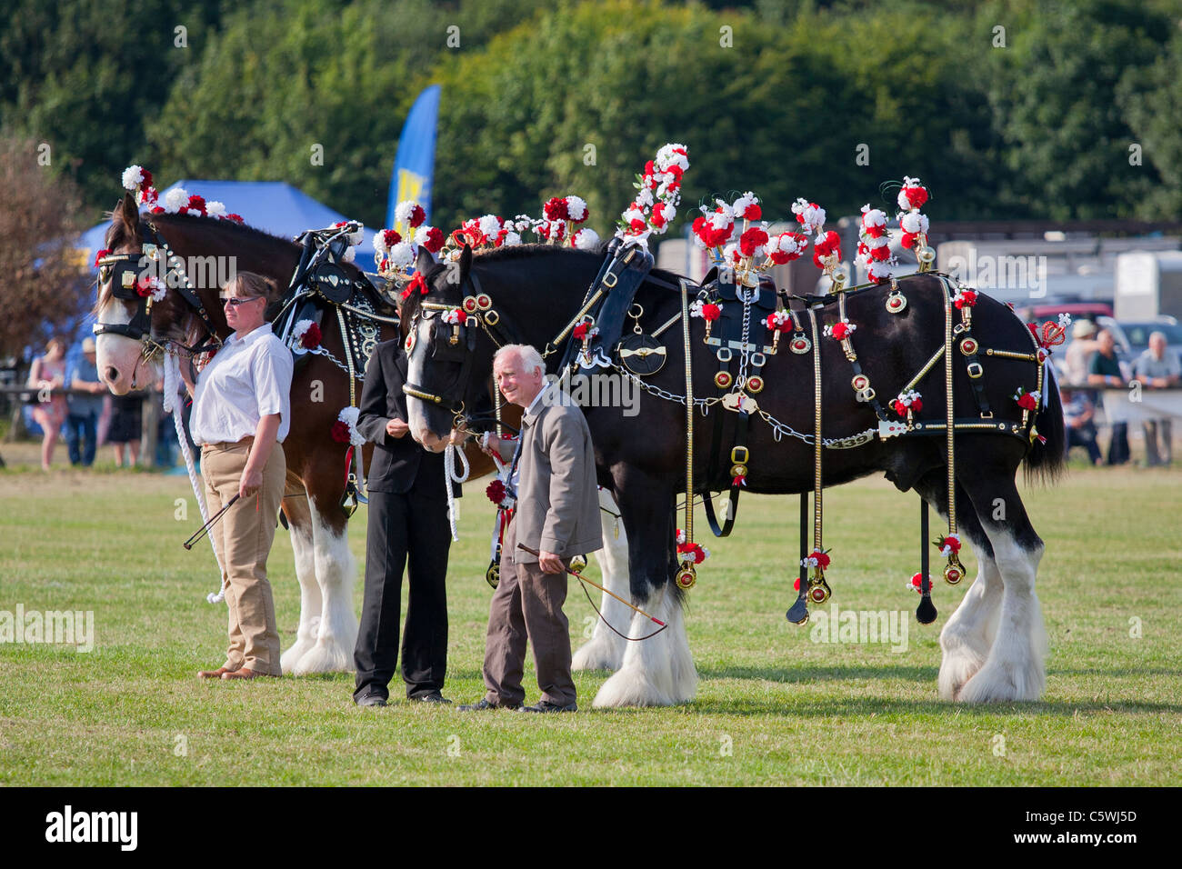 Shire Horses at the Bakewell Show, Bakewell, Derbyshire, England, UK - Stock Image